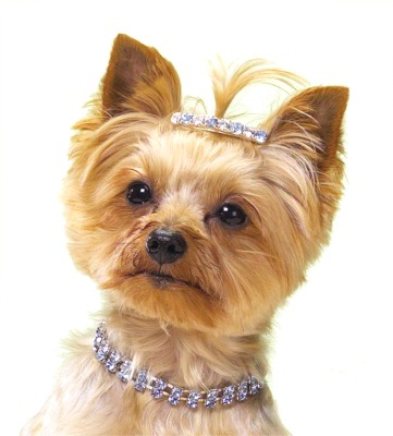 http://www.jewelinfo4u.com/images/Gallery/Dog-Necklaces.jpg