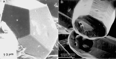 Single grain of Quasicrystal under electron microscope