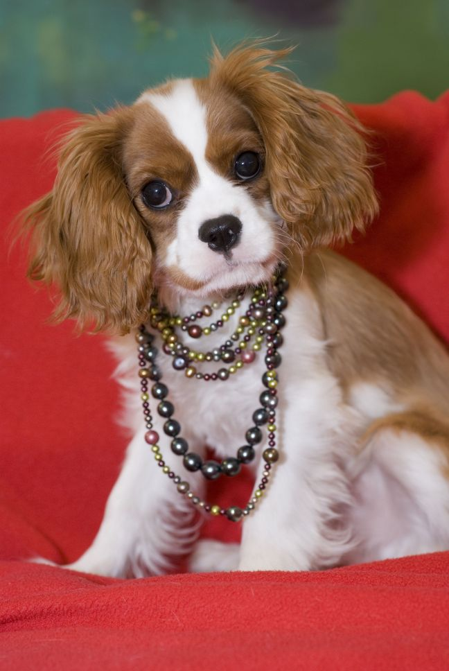 Diamond Dog Jewelry